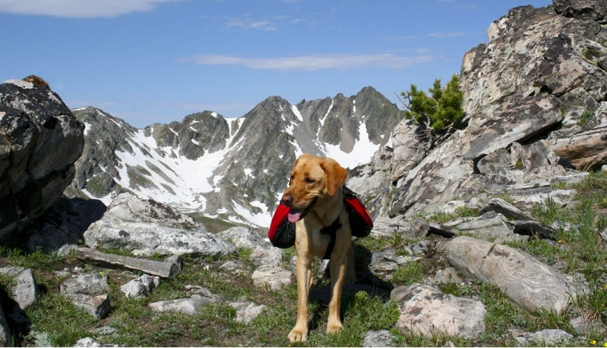 • Best dogs for hiking that can be left alone