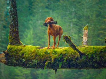 best dog for hiking and hunting