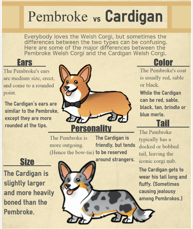 Welsh Corgi Dog Breed Comparison