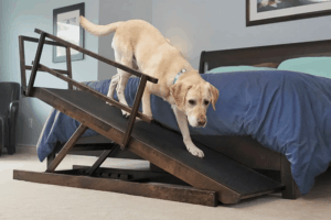 Best Dog Ramp for Bed