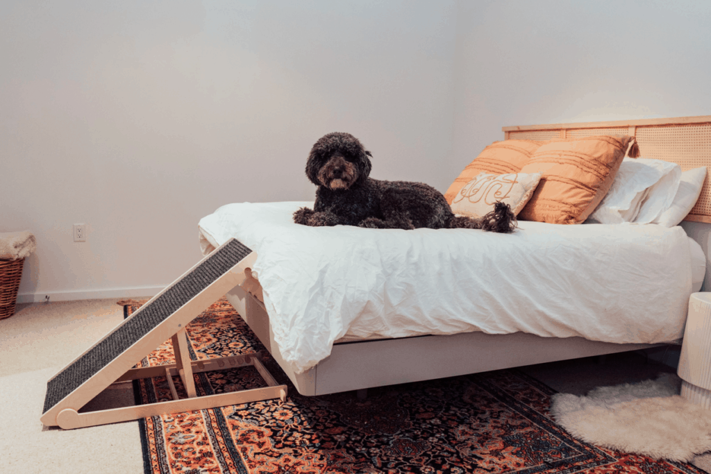 Best Dog ramps for bed