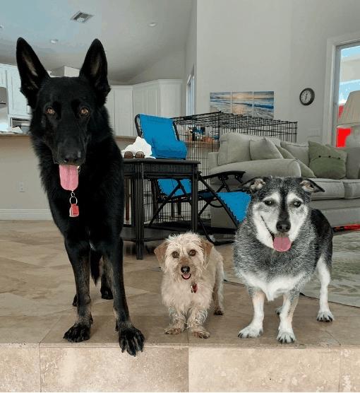 Rachel's Dogs